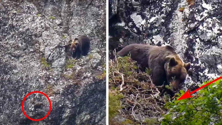 oso mata a osa