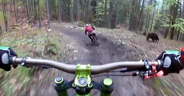 Dos ciclistas se ven sorprendidos y perseguidos por un oso pardo en plena carrera