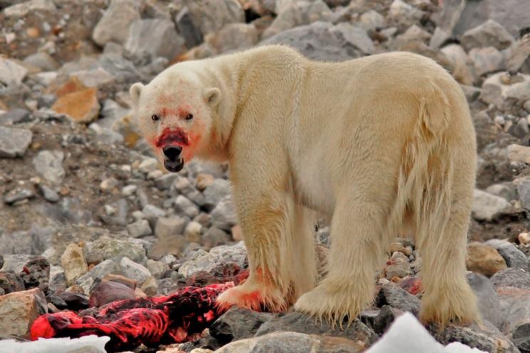 Un heroico cazador muere defendiendo a sus dos hijos del ataque de un oso
