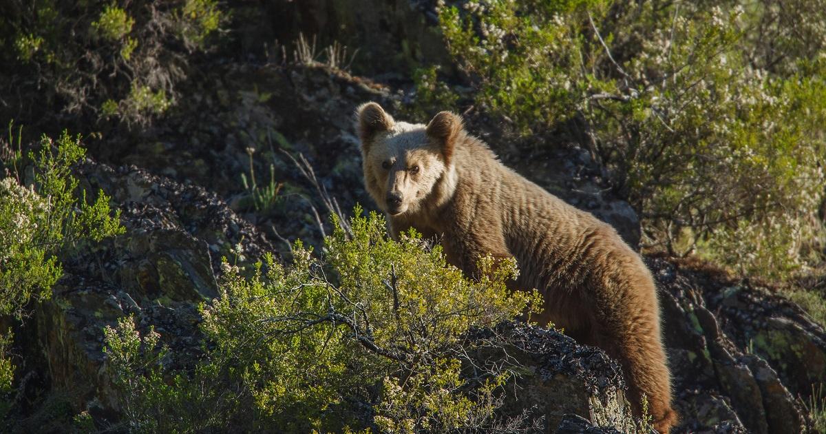 Cantábrico, el documental que muestra nuestra fauna más salvaje