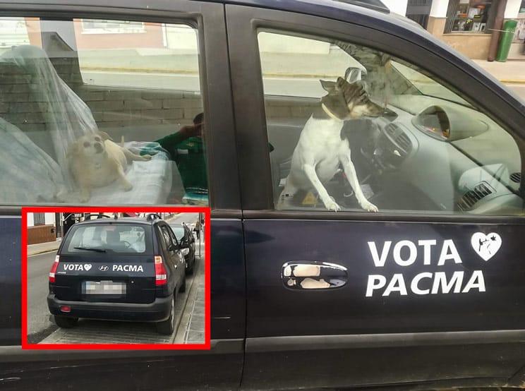 Fotografían a dos perros encerrados en el coche de un votante de PACMA en Sevilla