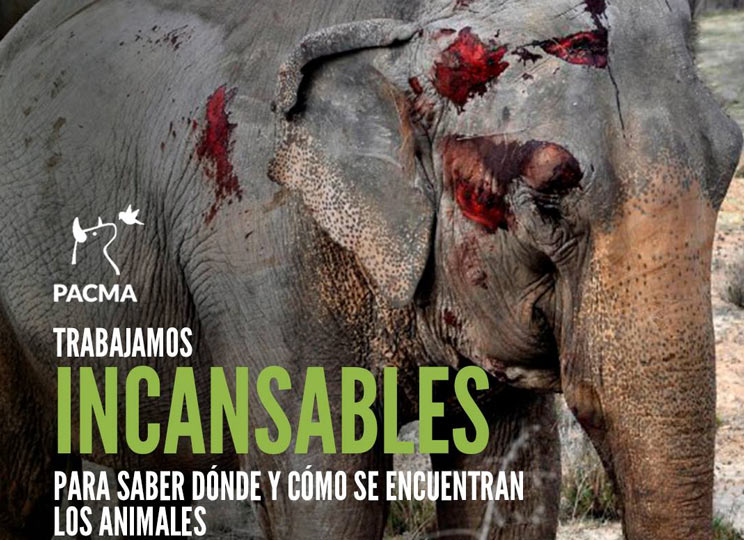 El accidente de los elefantes podría ser consecuencia de un sabotaje animalista