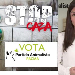 PACMA sufre una derrota electoral histórica y pierde a uno de cada tres votantes