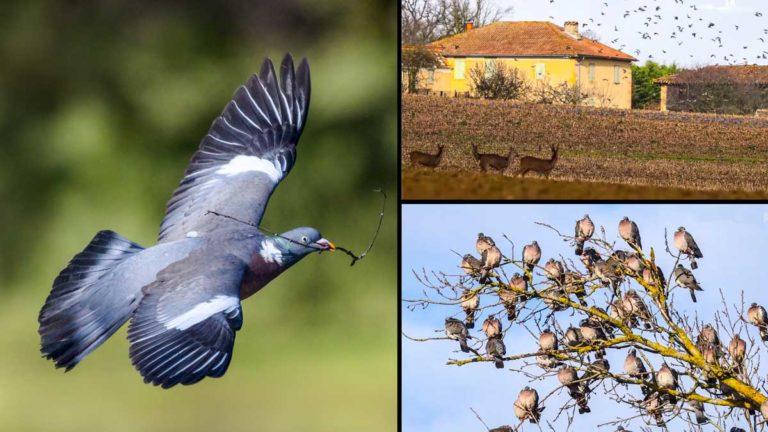 El vídeo recopila espectaculares imágenes de las palomas en su ruta migratorioa. © YouTube y Shutterstock