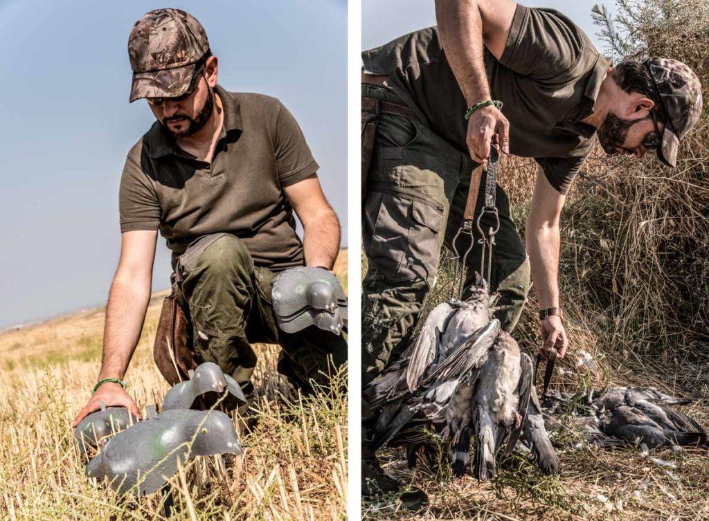 Cazador colocando reclamos de plástico y recogiendo las palomas.