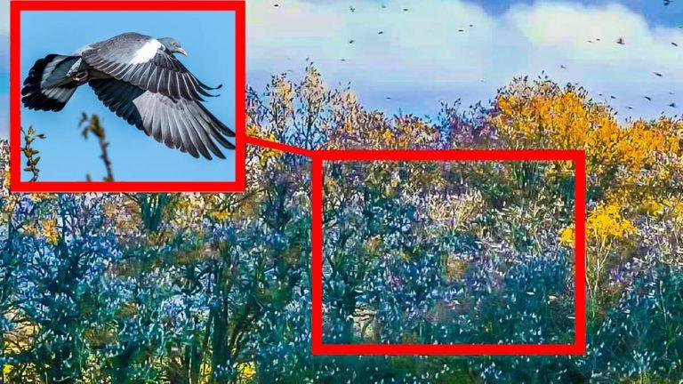 Las palomas torcaces en la arboleda. © Facebook