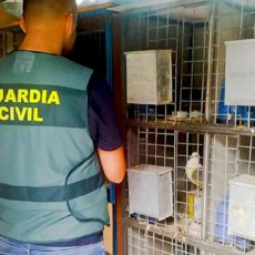 Tres detenidos por robar 35 palomos valorados en 20.000 euros en Valencia