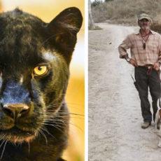Con podencos andaluces entre zarzas, así han buscado los cazadores la pantera de Granada