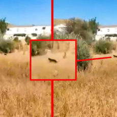 Difunden nuevas imágenes de la pantera de Granada, pero resulta ser un 'troleo' épico