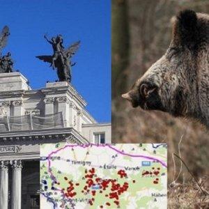 La peste porcina se acerca a España dejando cientos de jabalíes muertos
