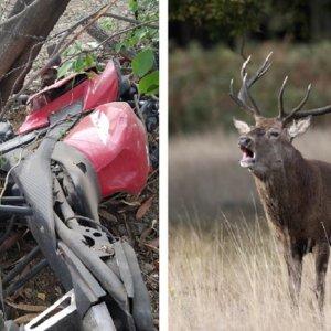 Una pareja muere al estrellar su moto contra un ciervo