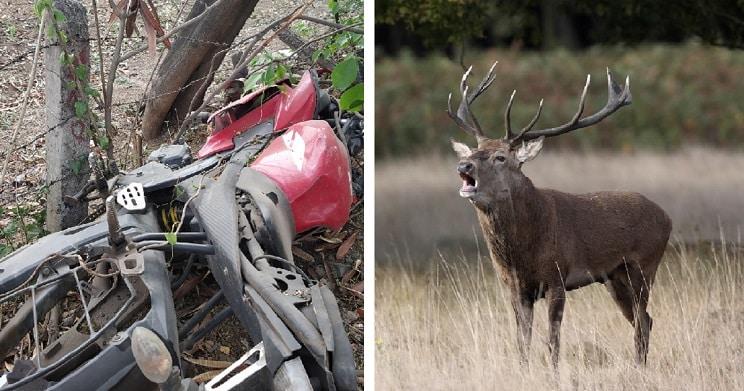 pareja muere accidente ciervo