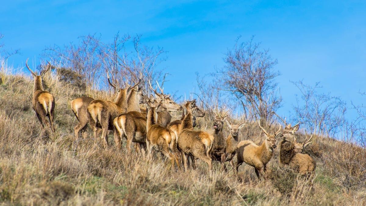 El PP pide prorrogar la moratoria que permitía cazar en los Parques Nacionales