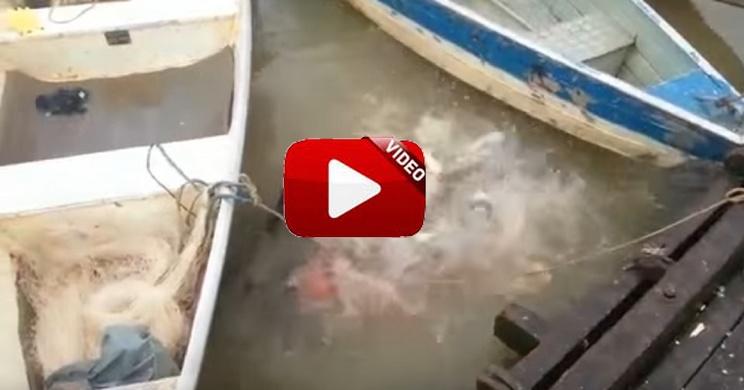 peces devoran presa.