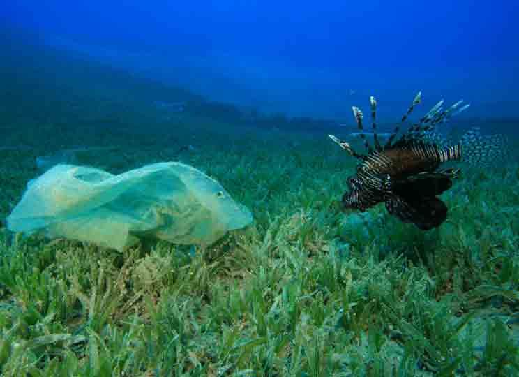 El efecto de los vertidos en el mar: los peces prefieren comer plástico