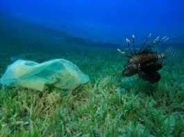pez come bolsa plastico