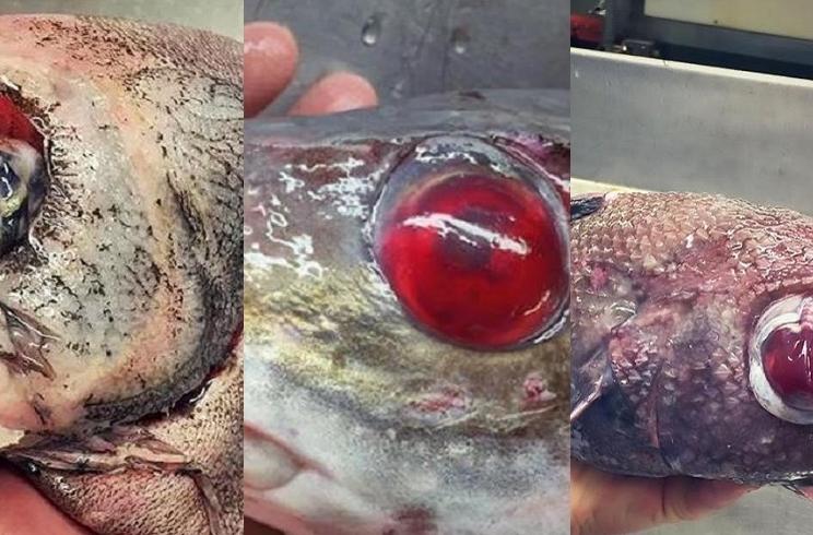 Estas son las últimas capturas del pescador ruso que atesora cientos de peces raros