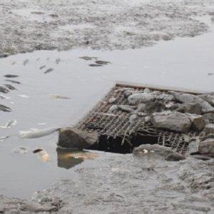 Mueren miles de peces durante el vaciado de un embalse extremeño