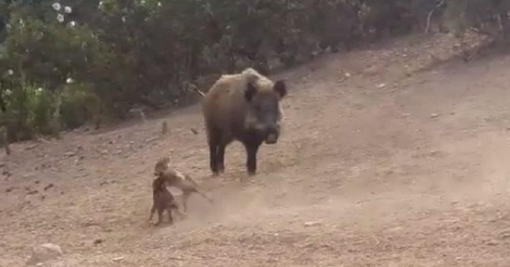 Dos rayones pelean por ver quién es el más fuerte