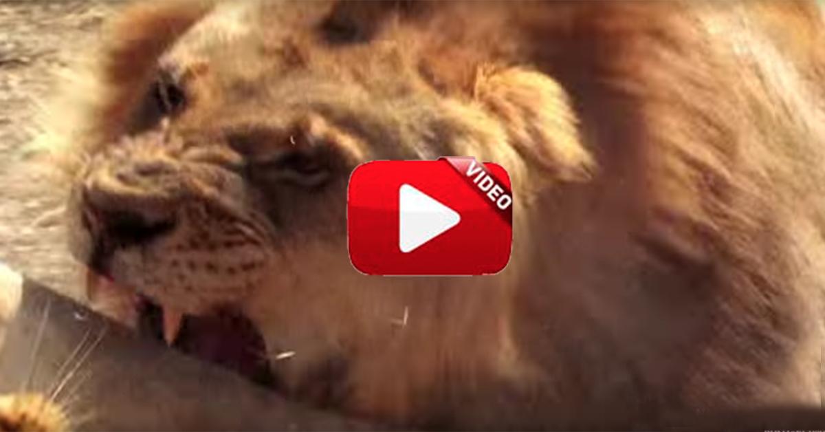 Las 5 peleas más impactantes del reino animal