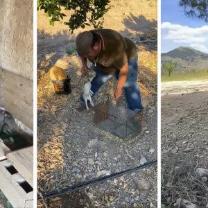 'Pencho', el capturador de conejos, jabalíes y palomas que arrasa en las redes