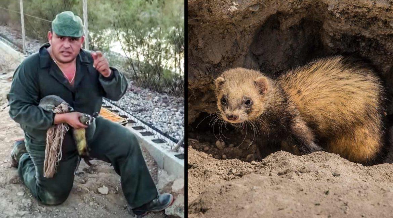 Truco de caza de El Pencho para sacar a un hurón que no quiere salir de la madriguera del conejo
