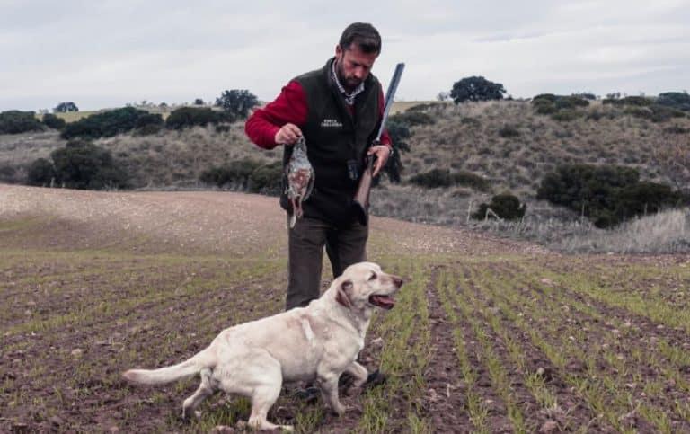 Perdices con perro ©Ángel Vidal