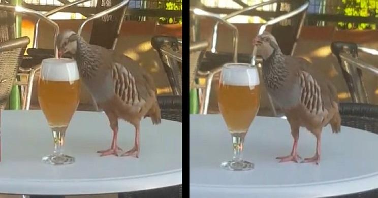 perdiz cerveza