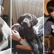 Una familia, rota tras perder a su perrita de caza: «Era muy importante para mi hijo»