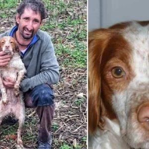 Aparece la perra del cazador que murió en un accidente el pasado sábado