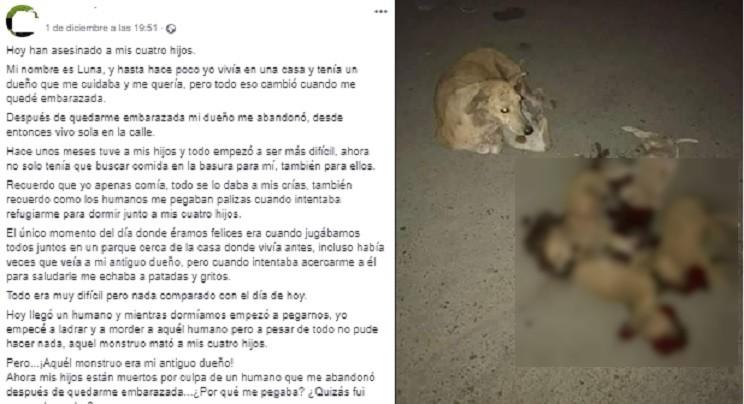 Desmontamos el último montaje viral animalista: esta foto no es actual ni ha sido hecha en España