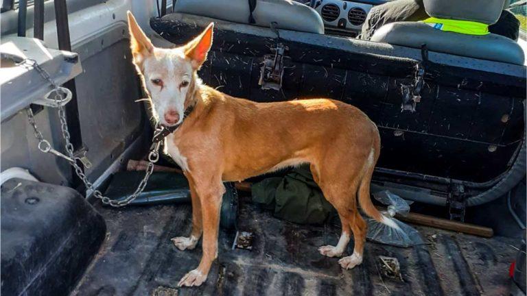 La perra de caza, tras ser recuperada por el cazador.