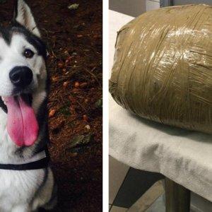 Deja a su perra en una residencia canina y se la devuelven muerta en un paquete