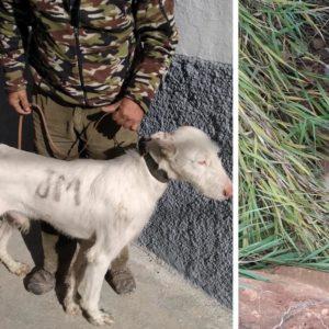 Un cazador denuncia la muerte intencionada de su perro tras perderse siguiendo el rastro de un jabalí