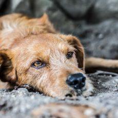 Sube un 25% el abandono de perros tras el confinamiento (y no, no son de caza)