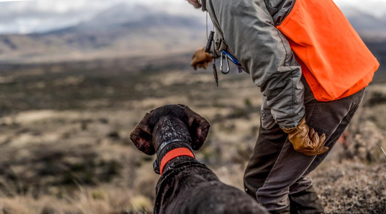 ¿Sabes hablar con tu perro? Este adiestrador de perros de caza te explica cómo hacerlo