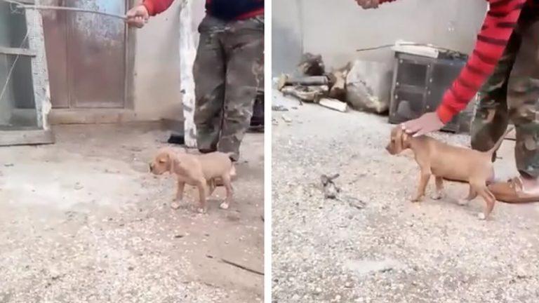 perro caza