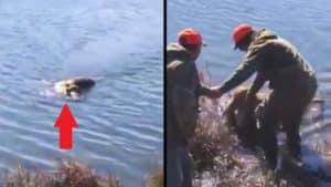 Un perro de caza cobra un ciervo en un lago a casi 200 metros