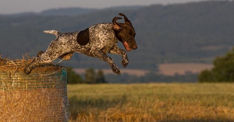 Los cazadores tendrán que esterilizar a sus perros por ley en La Rioja