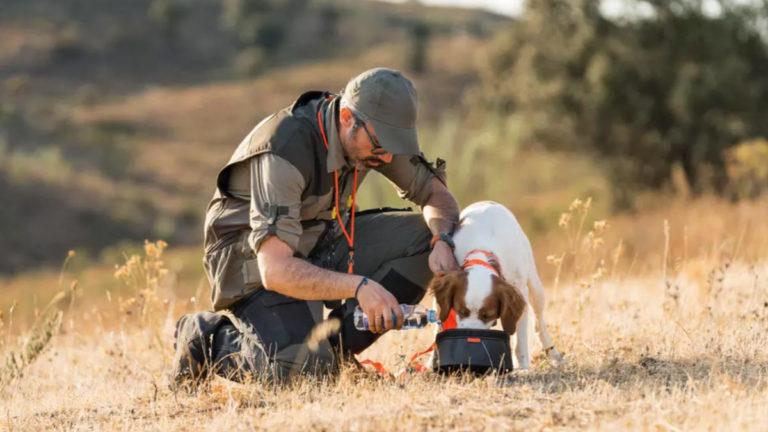 Perro de caza usando bebedero plegable.