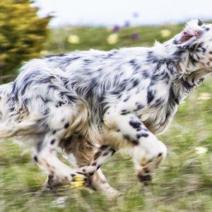 ¿Se puede curar la leishmaniosis en los perros? Estos son los tratamientos más eficaces y su precio