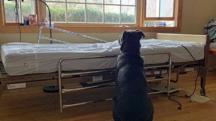 La triste foto de un perro de caza esperando a su dueño fallecido conmueve en las redes