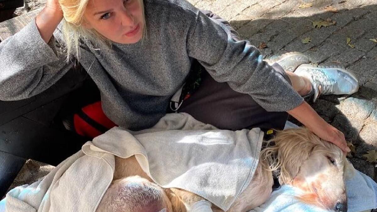 Un perro, gravemente herido por un jabalí, necesita varias transfusiones de sangre para salvar su vida