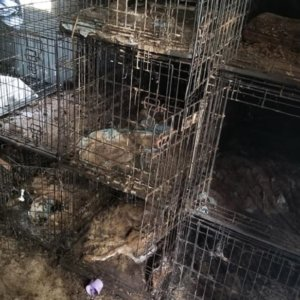 Hallan 150 perros muertos en casa de unos animalistas encargados de varios 'refugios'