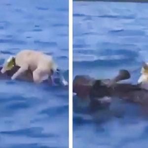 Este es el desternillante vídeo del perro de caza más optimista del mundo