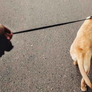 Alemania quiere obligar a pasear a los perros dos veces al día durante una hora