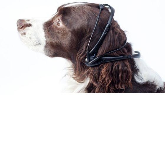 Inventan un traductor de ladridos: ahora sabrás qué te dice tu perro