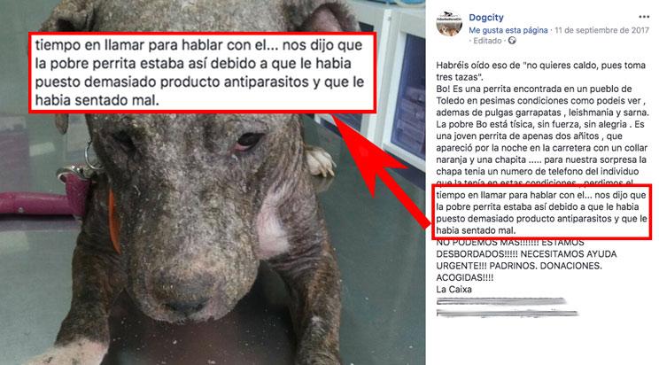 Texto publicado por Dogcity donde se asegura que Boo recibió un exceso de antiparasitario. /Facebook