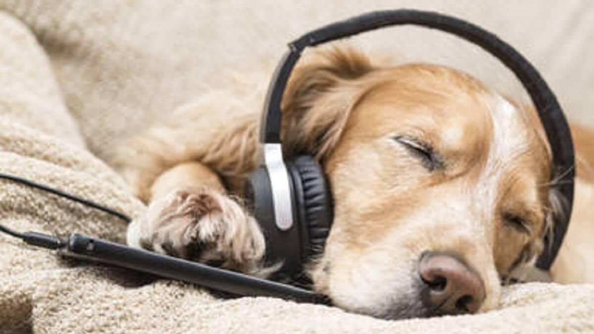 Cancelan el concierto para perros que iba a costar 8.000 euros a un Ayuntamiento de Valencia