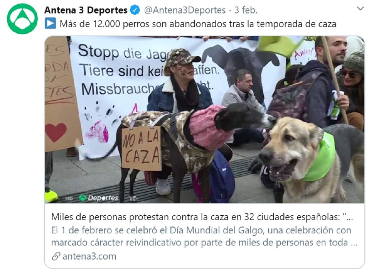 La RFEC pide a Antena 3 un debate sobre el abandono de perros de caza en televisión